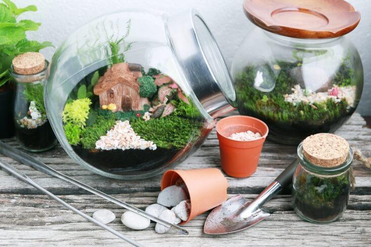 Yuk Bikin Terrarium, Taman Imut di Balik Kaca!